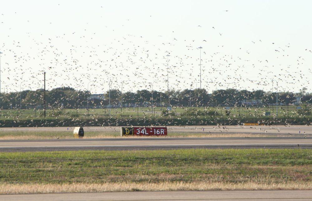 Alliance Airport 5